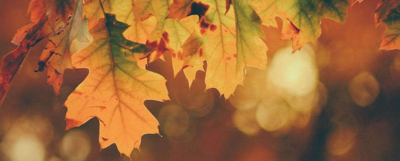 Herbst Dresden